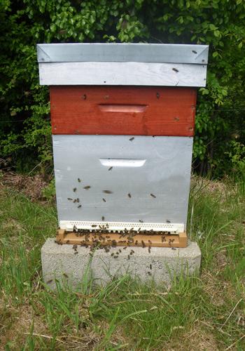 le rucher de l 39 abeille noire une ruche dans votre jardin. Black Bedroom Furniture Sets. Home Design Ideas
